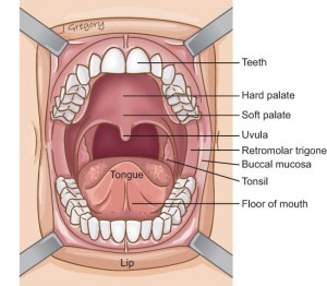 02a_mouthsites