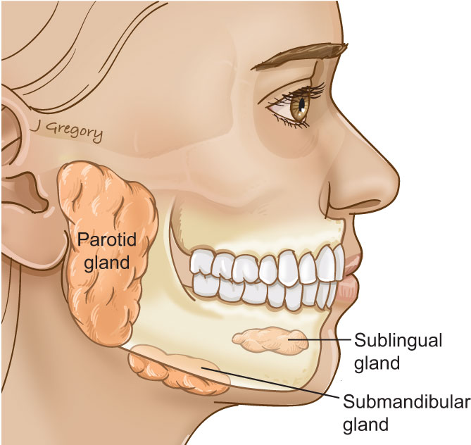 Anatomy of Salivary Gland Cancer: HeadandNeckCancerGuide.org