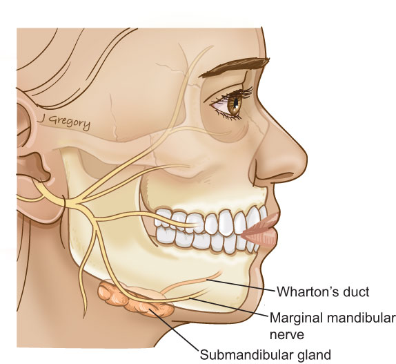 Anatomy Of Salivary Gland Cancer Headandneckcancerguide