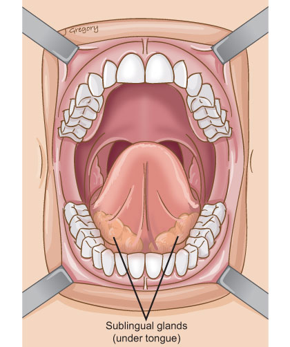Anatomy of salivary gland cancer for Floor of mouth anatomy