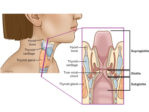 Laryngeal Cancer on where are your lymph glands located