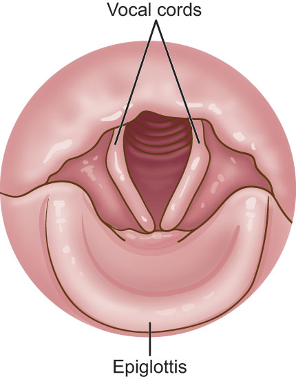 Laryngeal Cancer: Head and Neck Cancer Info for Teens Epiglottis