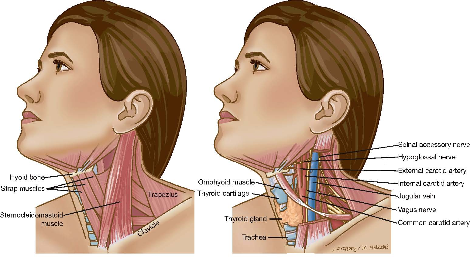 Neck Cancer Head And Neck Cancer Info For Teens-2094